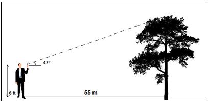 TAN Tree